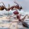 Formiche e termiti